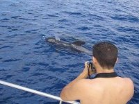 Avvista Gli Animali Marini