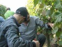 Partecipa Alla Produzione Del Vino