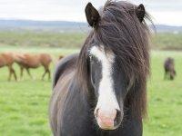 Lezioni di equitazione di 3 ore a Belluno