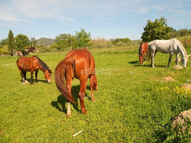 Cavalli liberi.jpg
