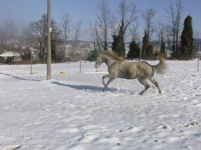 Passeggiata cavallo per coppie weekend a Volterra