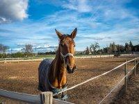 Cavallo nel recinto all'aperto