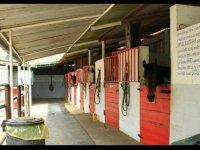 Il maneggio e i nostri cavalli