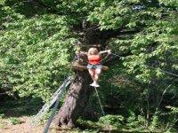 Acrobatics among trees