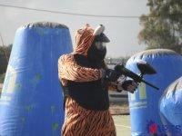 Anche le tigri giocano a paintball!