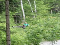 Leaping through the trees