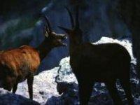 Fauna Tipica