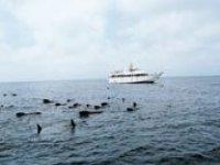 Avvistamento cetacei