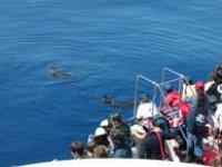 8 specie di cetacei
