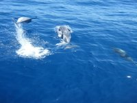 Sailing with dolphins!