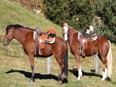 Passeggiata a cavallo mezza giornata nel Gargano