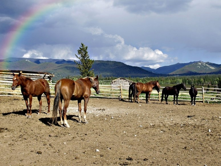 Paesaggio e cavalli