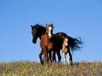 Ti aspettano diversi tipi di cavallo