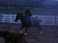 Cavalcata nel ranch