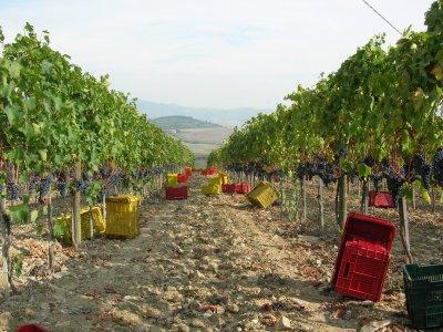 Tour enogastronomico Monte Amiata+soggiorno 2notti