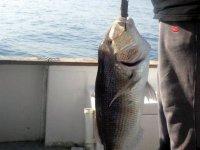 Pescare nel mare di Sicilia