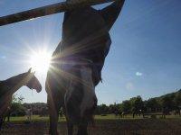 Un selfie da cavallo