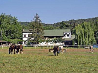 Maneggio Cavalli Pietrarossa