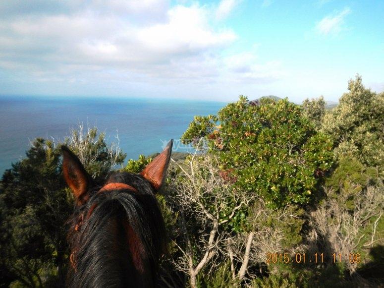 mare e cavalli