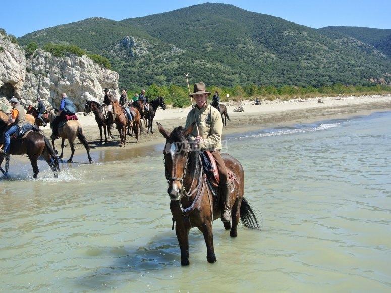 cavalli in acqua