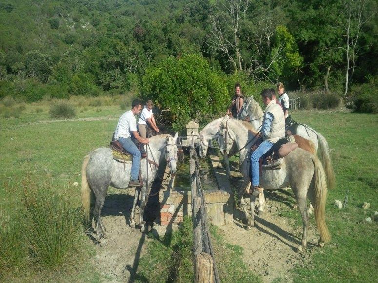 un momento di pausa per i cavalli