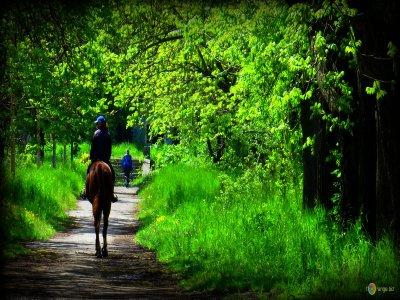 Escusione a cavallo nel Parco dell'Uccellina di 2h
