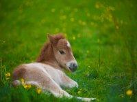 baby pony