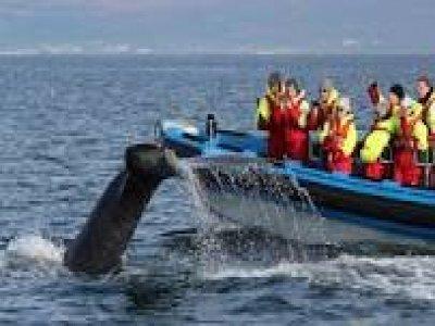Whalewatching e snorkeling a Loano