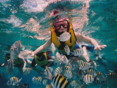 Snorkeling in the Gallinara Islands or Bergeggi 2 hours