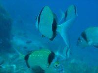 Le specie marine più colorate