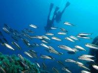 La fauna del Mar Mediterraneo