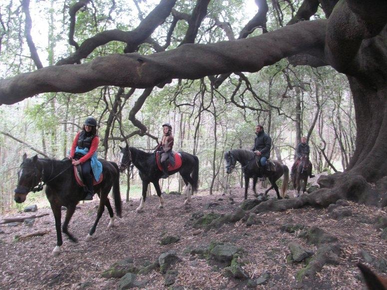 In cammino tra i boschi