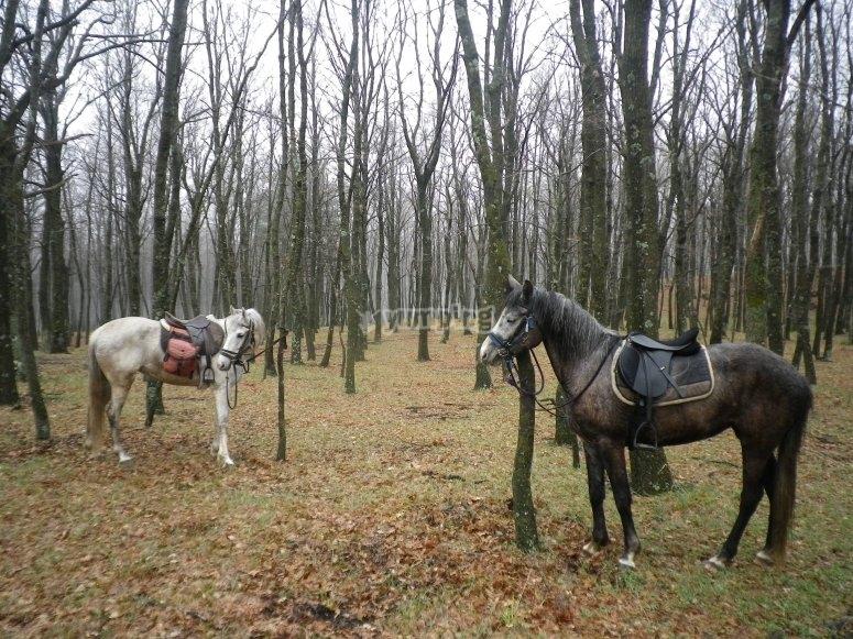cavalli incantevoli