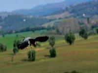 Natura e Falconeria