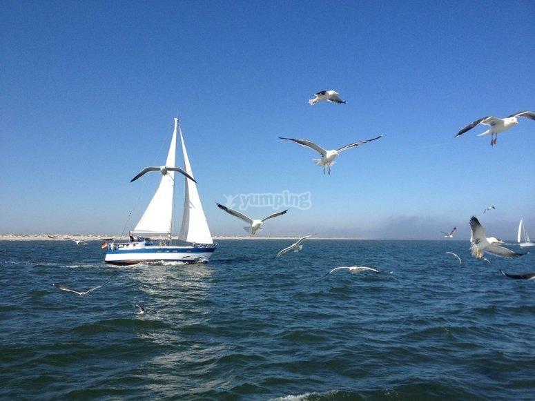 goditi la tranquillità del mare