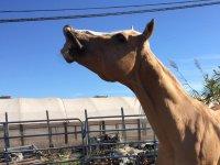 Espressioni da cavallo
