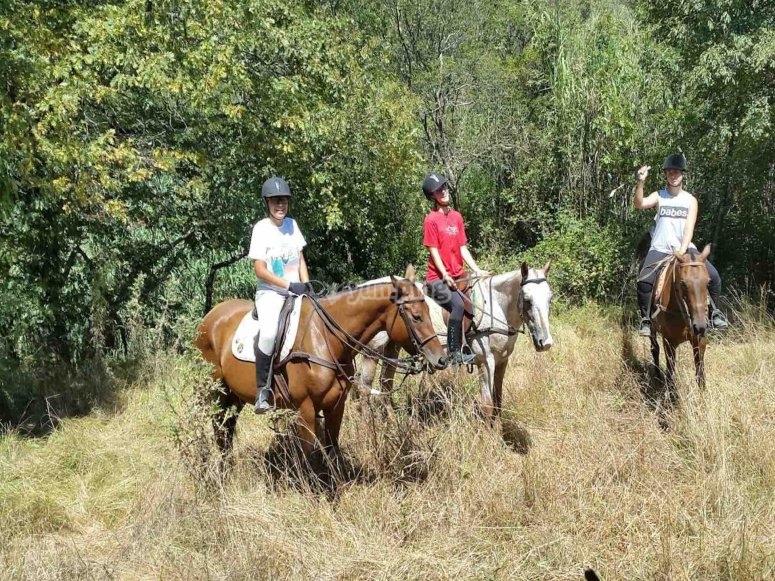 Tre cavalli in compagnia