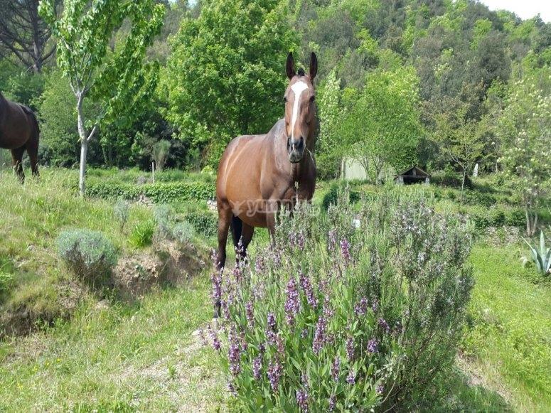 Un cavallo nella natura