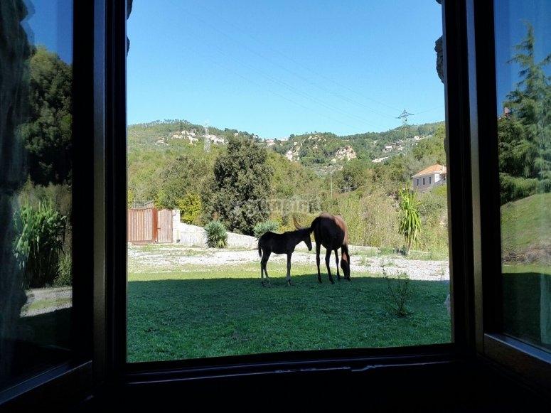 Piccola finestra sul mondo equino
