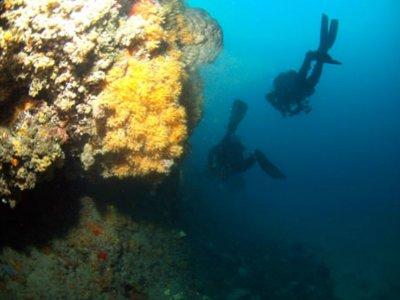 Immersione nei fondali marini liguri
