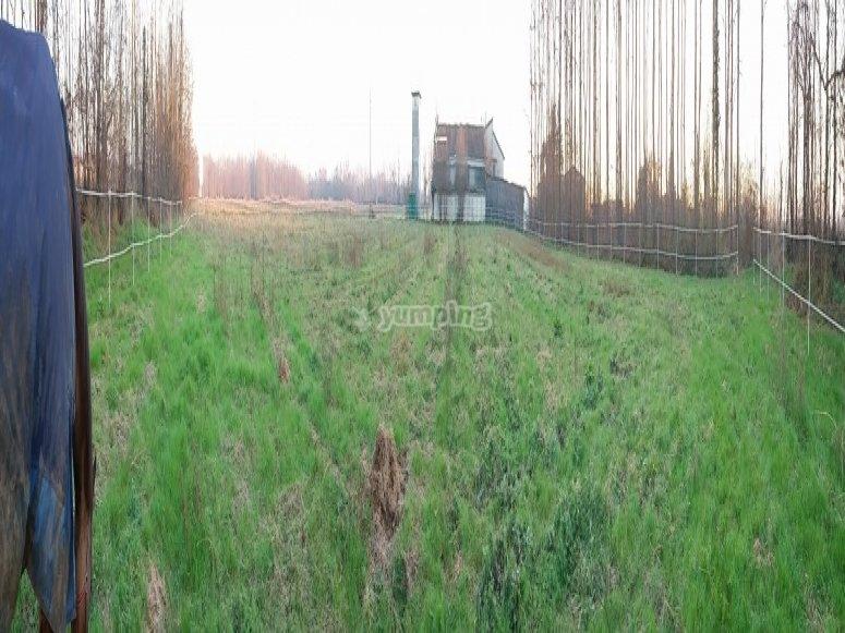 campone in erba.jpg