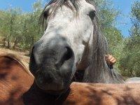 Alcuni dei nostri cavalli ...