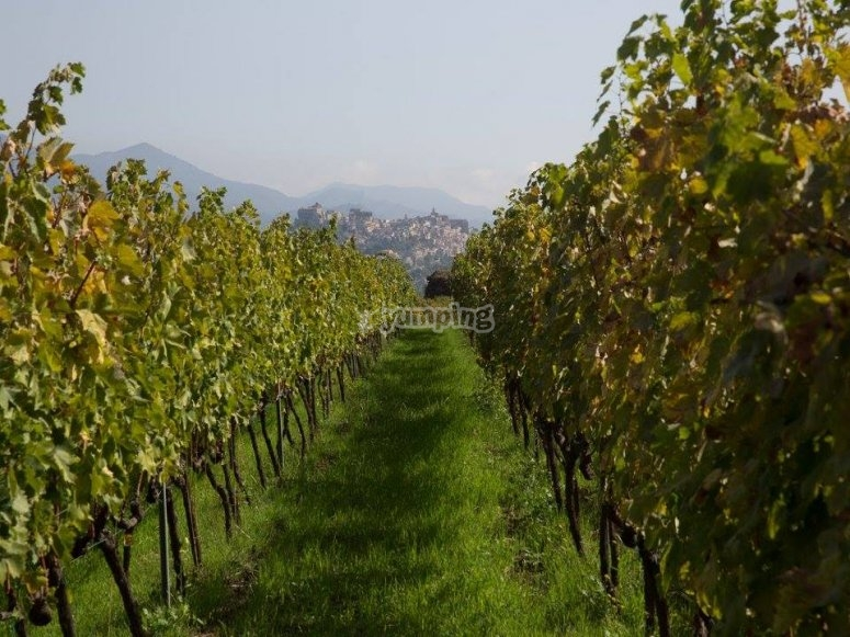 Vini dell' etna