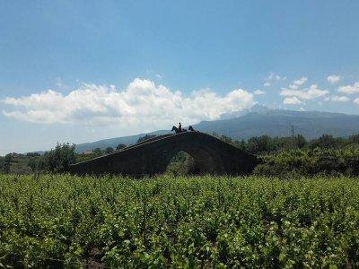 Escursione a cavallo sull'Etna + degustazione vini