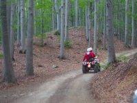 quad nei boschi