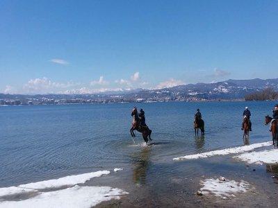 Passeggiata a cavallo tre ore Lago Maggiore
