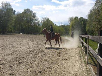 Passeggiata e lezione di equitazione a Taino 3 ore
