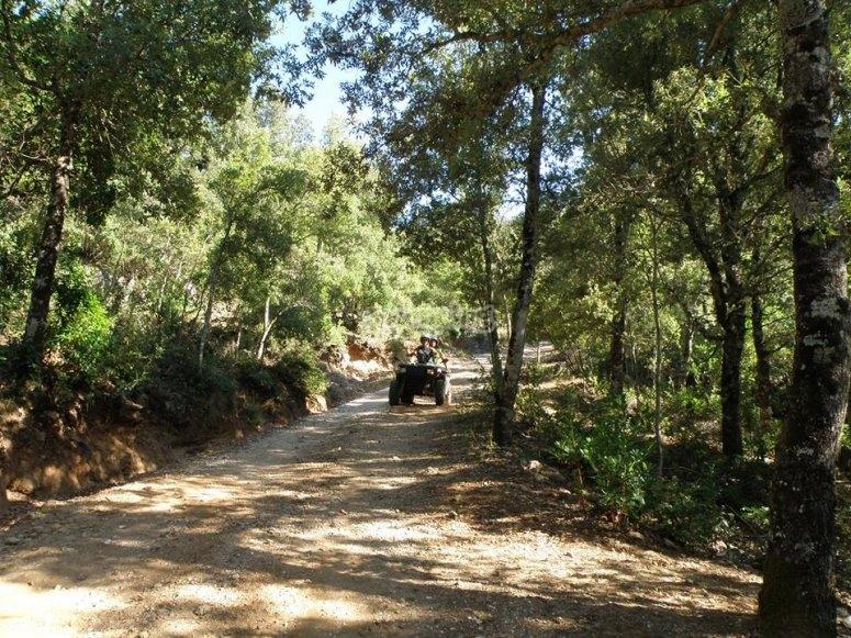 Tra i boschi sardi