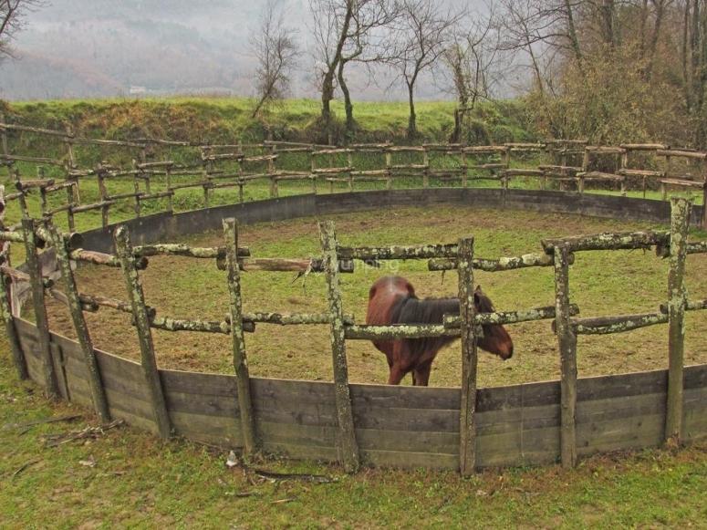 Uno dei cavalli del maneggio