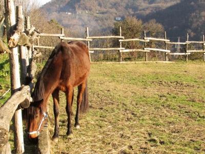 Passeggiata a cavallo a La Spezia di 2 ore